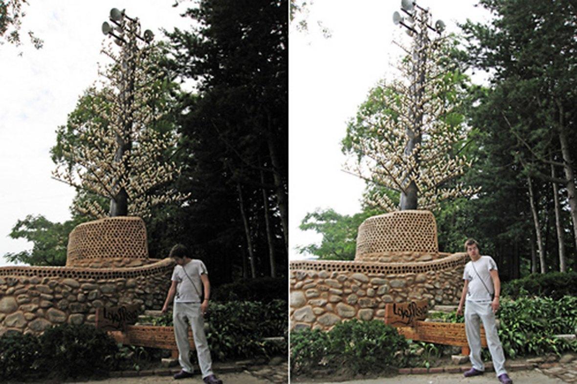 drvo-nami